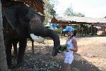 приятного аппетита - слоник...