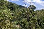 Джунгли Кхао Сок