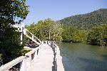 Парк мангровых деревьев